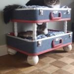 beliche-para-gatos-reciclado
