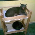 beliche-para-gatos-reciclado-2