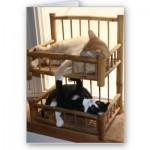 beliche-para-gatos-reciclado-5